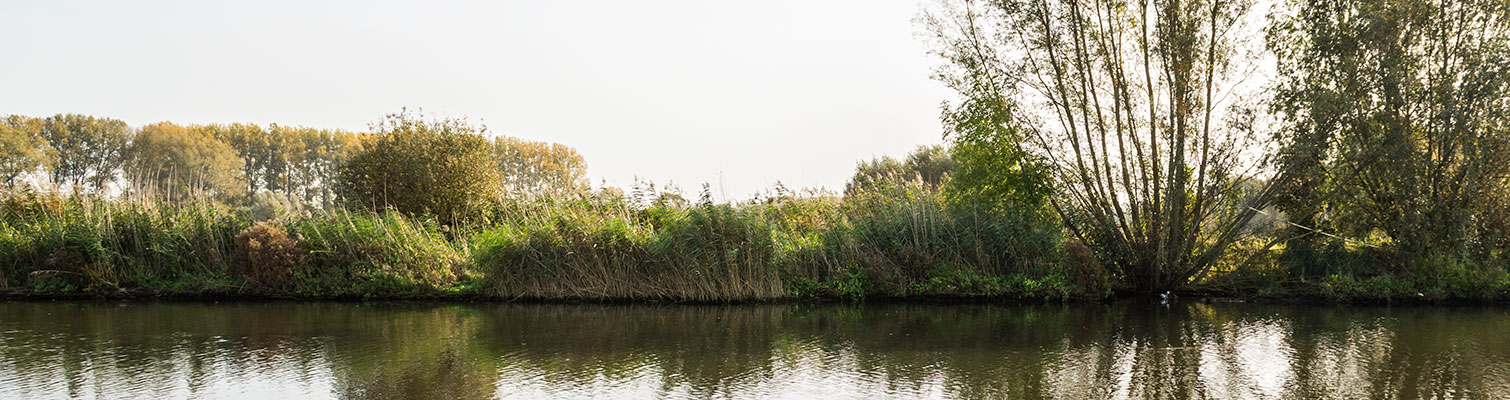 Walleken-hoofdfoto-omgeving